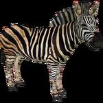 Chapman's Zebra (DutchDesigns)