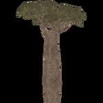 Madagascar Baobab (Aurora Designs)