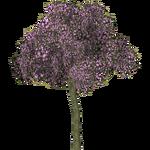 Floss Silk Tree (VGnome)