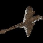 Ambient Dimorphodon (Bunyupy)