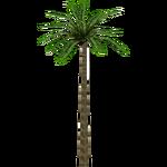 Acai Palm (Hispa Designs)