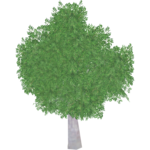 Grey Gum Tree (Worldwide Designers United)