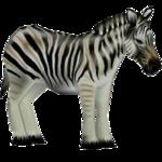 Burchell's Zebra (German 13 & Mondschatten)