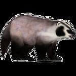 American Badger (Stormy)