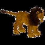 Barbary Lion (Bunyupy)