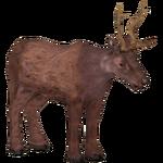 Bawean Deer (Jannick)/Version 1