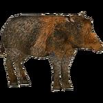Collared Peccary (Kingcobrasaurus)