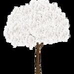 White Ipe (Hispa Designs)