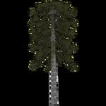 Antarctic Monkey-puzzle Tree (Demon Hunter)