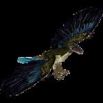 Archaeopteryx (Tamara Henson)