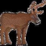 Black-Tailed Deer (Zoo Admin Design Team)