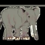 African Forest Elephant (Tatanka Yotanka)