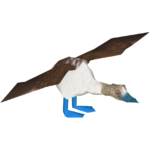 Blue-footed Booby (Jannick)/Version 1