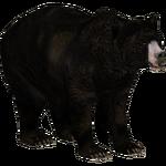 Bergman's Bear (Tamara Henson)