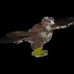 Common Buzzard (Ulquiorra)