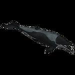 Aetiocetus (Braq, Dinosaur & Leafeon)