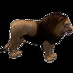 Barbary Lion (Havok1199)