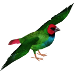 Fiji Parrotfinch (MasterChief123)