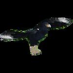 African Black Eagle (Hispa Designs)