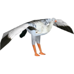 Andean Goose (Mika & Penguinman)