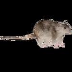 Brown Rat (Ulquiorra)