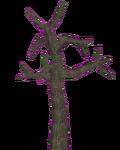 Dead Joshua Tree (Z-Studio)