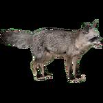 Bat-eared Fox (ZTABC Team)