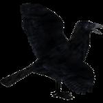 American Crow (SatchellWK)