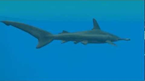 Realistic Shark Animations in Zoo Tycoon 2