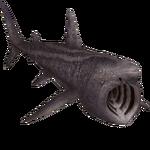 Basking Shark (Zerosvalmont)