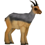 Beira Antelope (Zoo Admin Design Team)