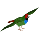 Fiji Parrotfinch (Tamara Henson)
