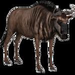 Blue Wildebeest (slice)