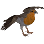 European Robin (Tamara Henson)