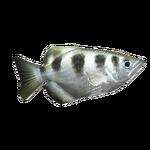 Banded Archerfish (Fishzilla)
