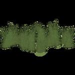 Beardless Rabbitsfoot Grass (Artifex)