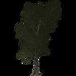 Chestnut (Thom)
