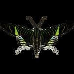 Ambient Green-banded Urania (MasterChief123)