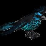Beryl-spangled Tanager (Bunteriro)