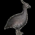 Elegant Crested Tinamou (MiBound)