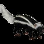 African Striped Weasel (Tamara Henson)
