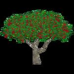 Royal Poinciana (Artifex)