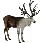 Bush-Antlered Deer (Demon Hunter)