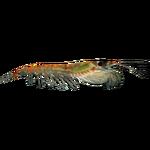 Antarctic Krill (Whalebite)