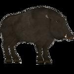 European Wild Boar (SilesianTomcat)