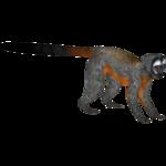 Black-headed Night Monkey (Bunteriro)