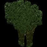 Bamboo (Zeta-Designs)
