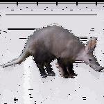 Aardvark (Royboy407)