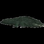 American Alligator (Penguinman)