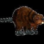 European Beaver (Panda11, SilesianTomcat, & The Exhibit)